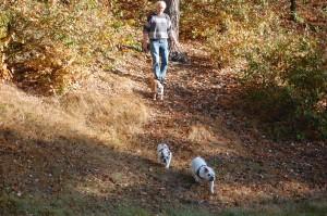 Bullerbasserne er en tur i skoven
