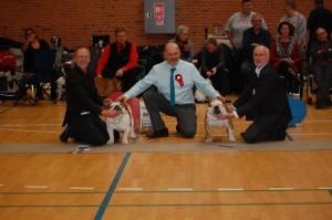 Frej blev 2. vinder efter bror Loke i champion klassen og blev samtidig Bulldog of the year