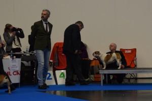Gefion 1. vinder åben klasse Dommer Dan Ericsson